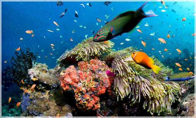 snorchlovanie-na-maldivach