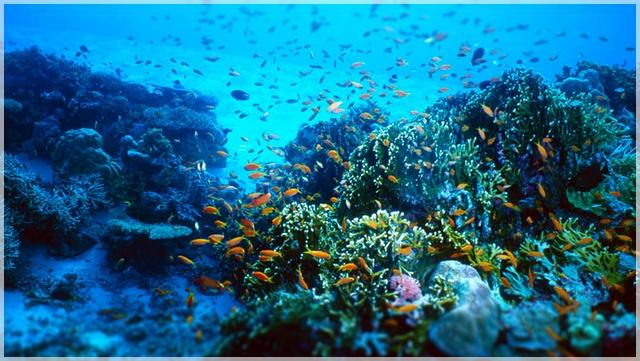 šnorchlovanie v Thajsku, Krabi, Phuet