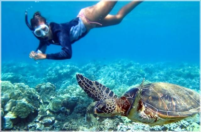 šnorchlovanie s korytnačkami pri tureckom pobreží